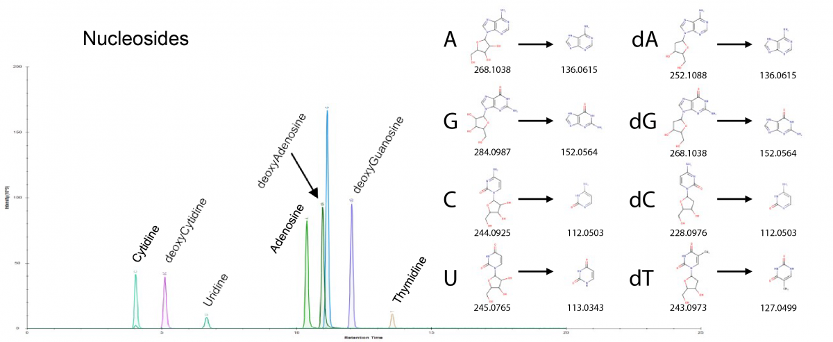 The figure depicts ion chromatograms for nucleosides and deoxynucleosides. Shown at right are m/z values for the (deoxy)nucleosides and for their nitrogenous base fragments.